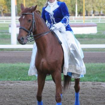 лошадь и шляпка