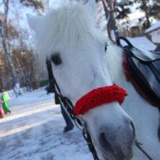 лошадка смотрит с интересом